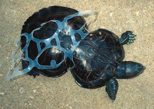 Plastic turtle by stefan leijon on flickr
